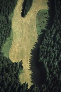OE037 'the edge of a wood!'