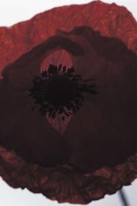 OE080 black shawl