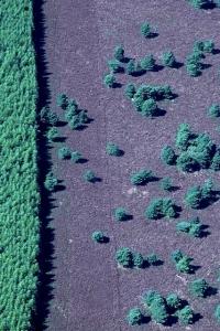 SH60 Heather moor, Scots pines & plantation